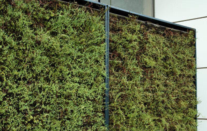 Fassadenbegrünung, Grüne Fassade, Grüne Wand, Bauwerksbegrünung, Fassaden, Fassadenbekleidung, Kletterpflanzen, Fassadenbau, Begrünung, Dachbegrünung, Sedumpflanzen, Pflanzen, tragenden Fassade